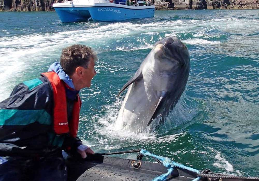 Fungie Dingle Dolphin Trips Dingle Harbour Marina A whole weekend dedicated to celebrating fungie the dingle dolphin living in dingle harbour. fungie dingle dolphin trips dingle